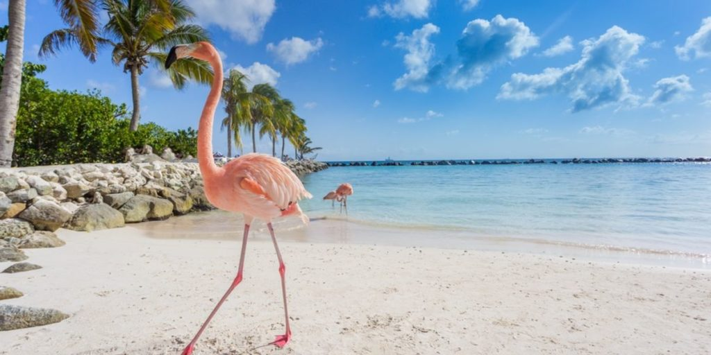 Vuelos a Miami + Aruba a partir de AR$ 34.684 (U$D 750) desde Bs. As.